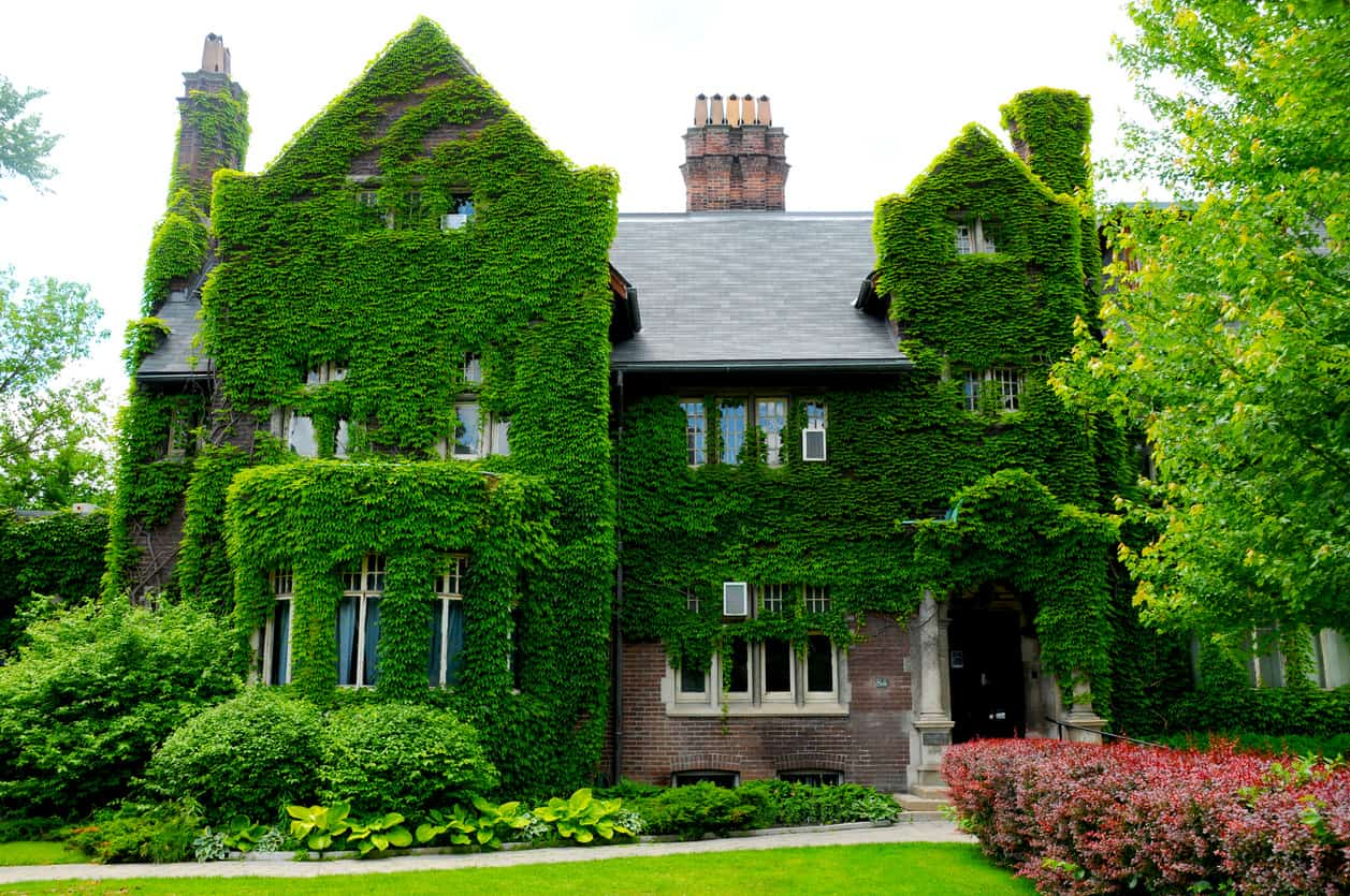 Large brick mansion covered in vegetation. It's getting a bit unruly... needs a trim.