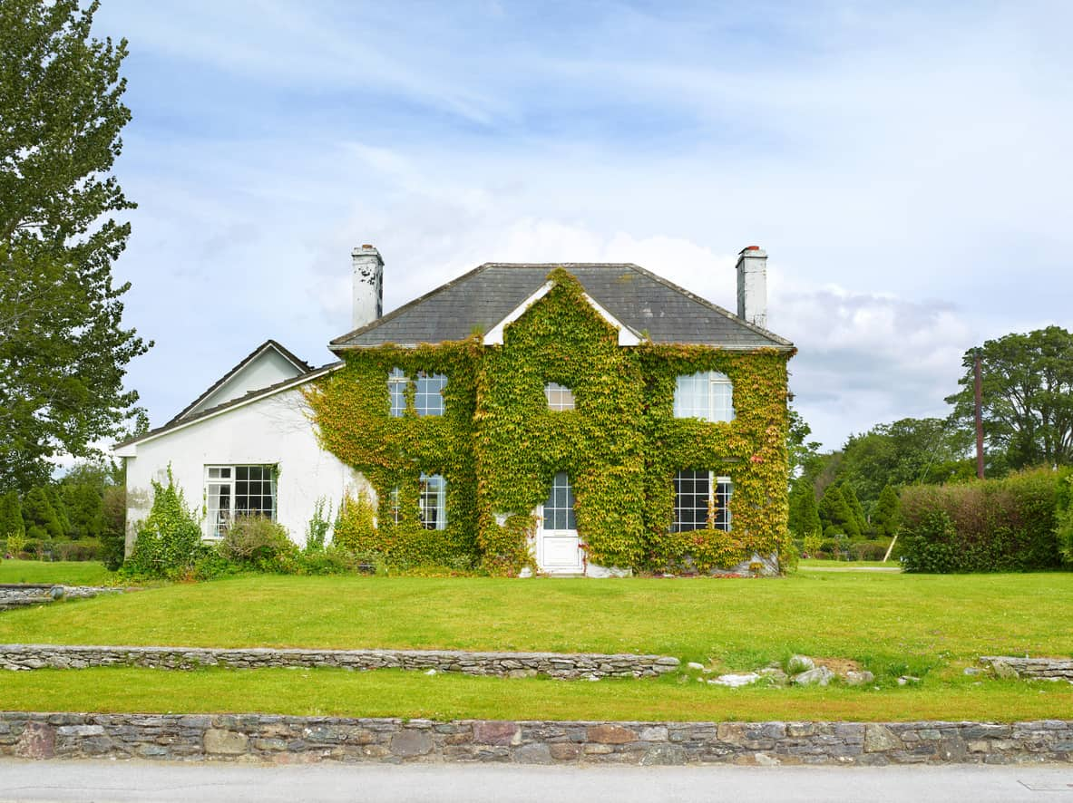 Contemporary home in Ireland covered in ivy. It looks a bit derelict to me.