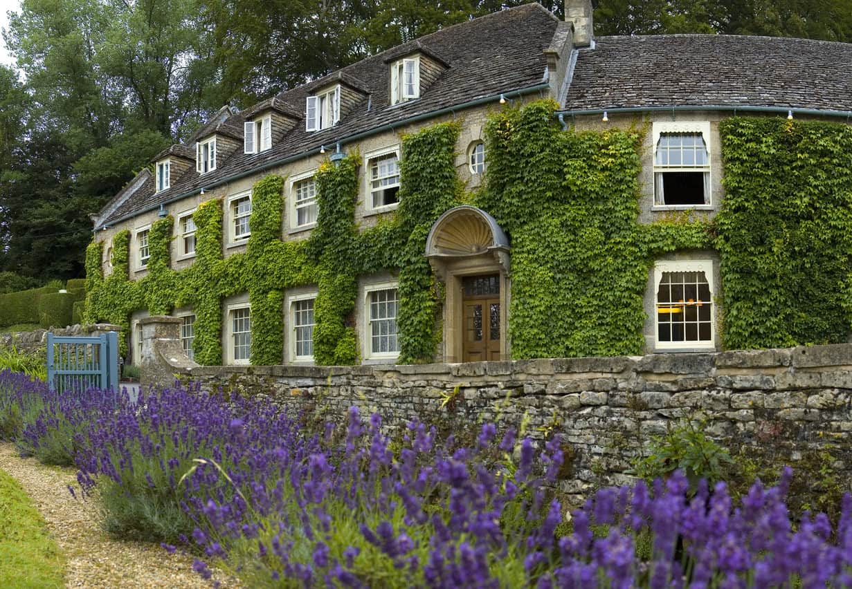 Large old home with ivy covering most of the exterior facade. The extensive lavender gardens in front contrast nicely with the green exterior the ivy provides.