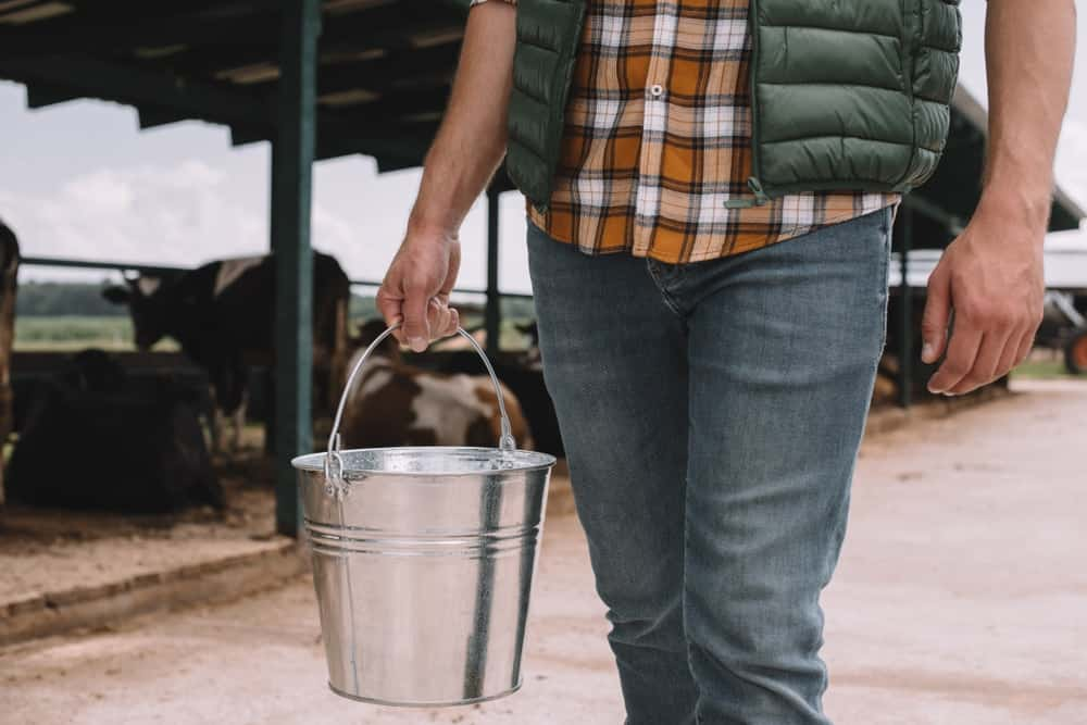 A farmer holding a metal bucket that stores the feeds for his farm animals.