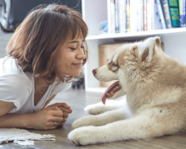 Pet friendly flooring for pet owners.