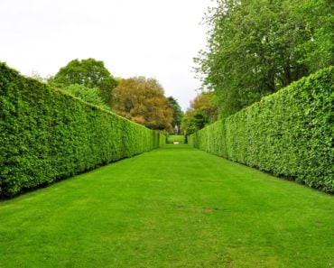 Types of hedge lead image