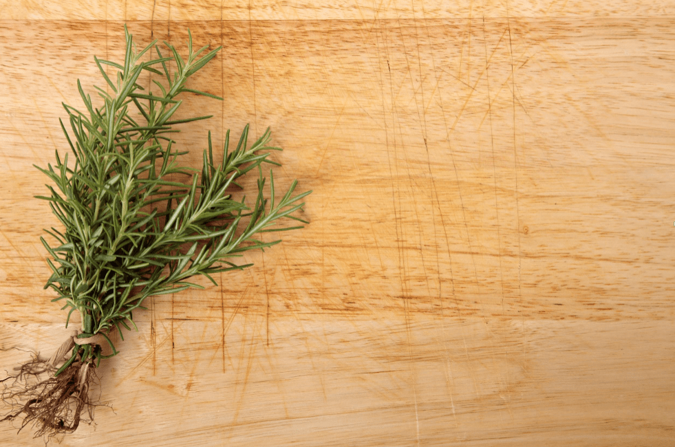 Rosemary plant on a wooden table.