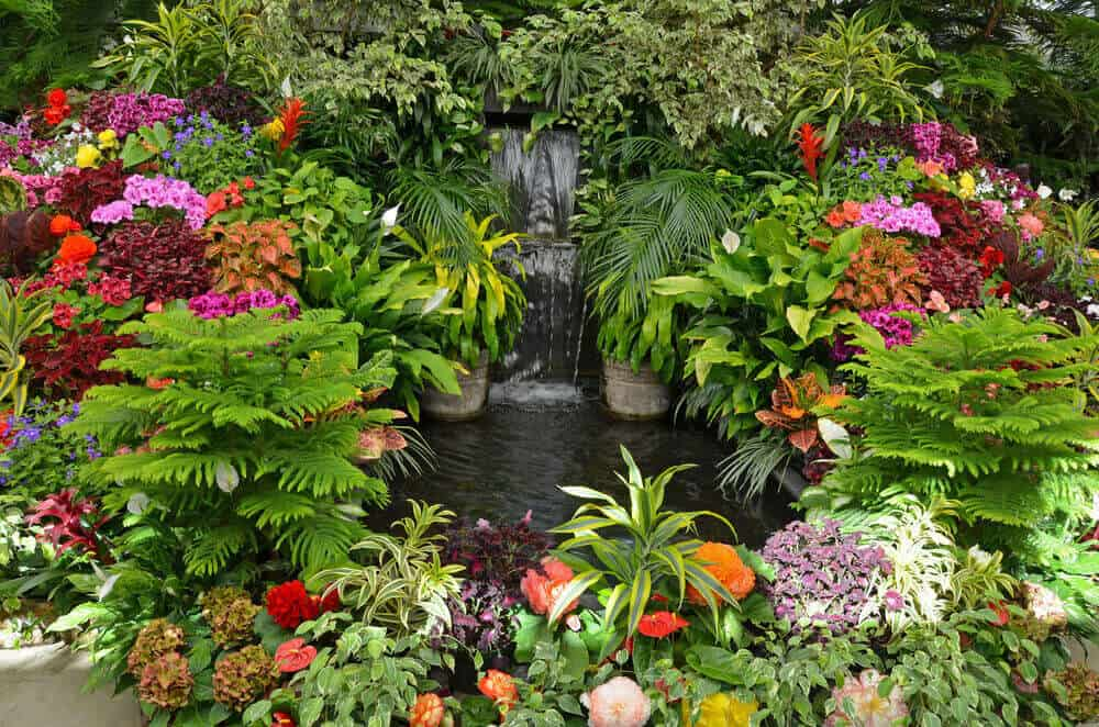 A tropical garden with different types of plants and colorful flowers.