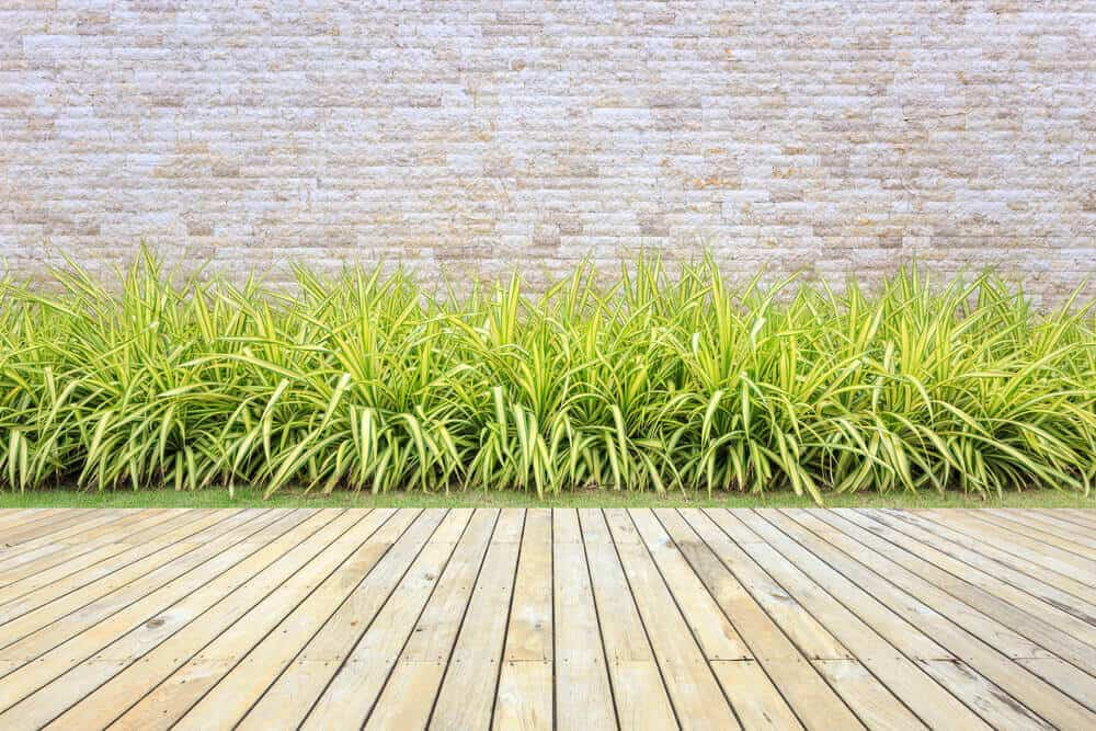 Lawn and plant bed edged with wooden materials.