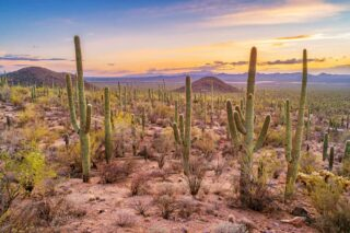 132 Types of Cacti (A to Z Photo Database)
