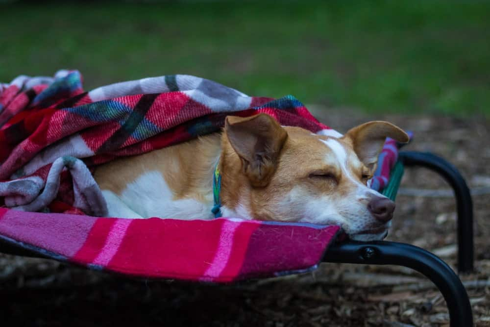 Dog sleeping comfortably on a cot outdoors.