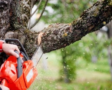 14 Different Types of Tree Cutting Tools