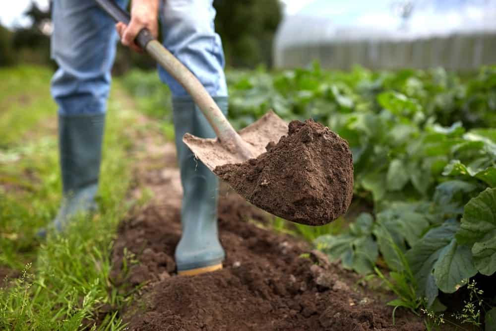 Digging soil in a farm.