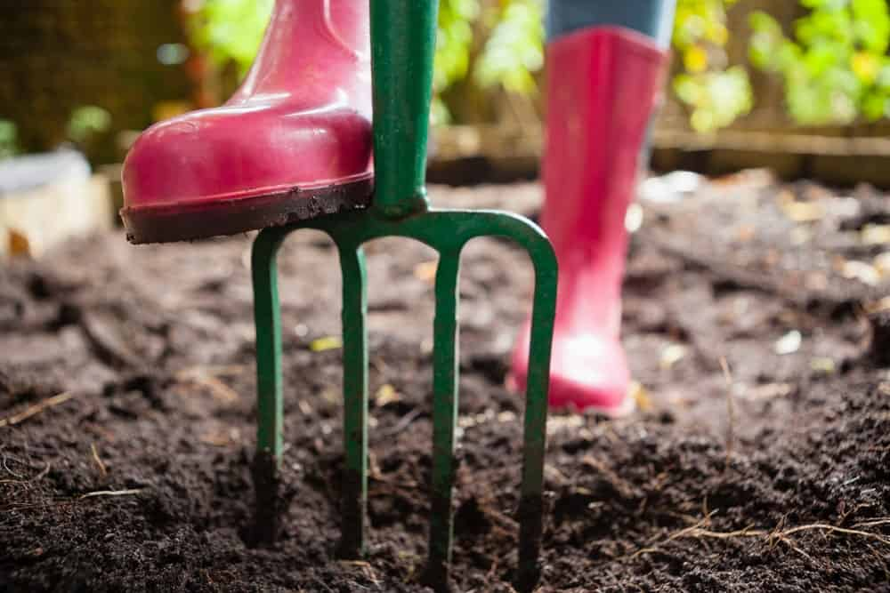 Green gardening fork is used to dig through the soil.
