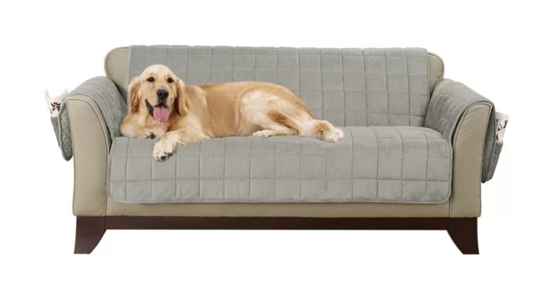 Golden retriever sitting on beige sofa with gray velvet slipcover on top.