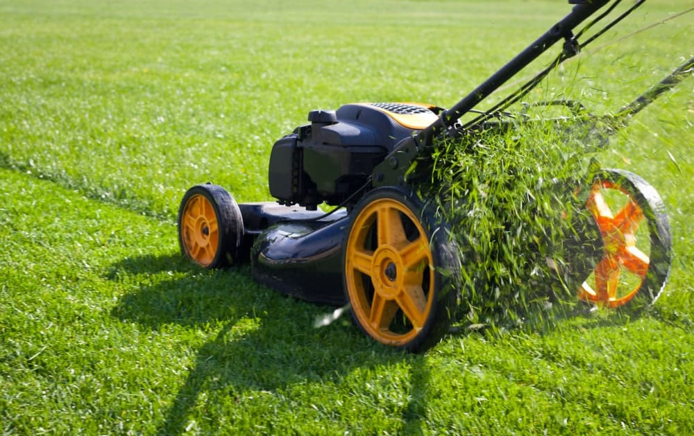 Mower used to cut lawn grasses.