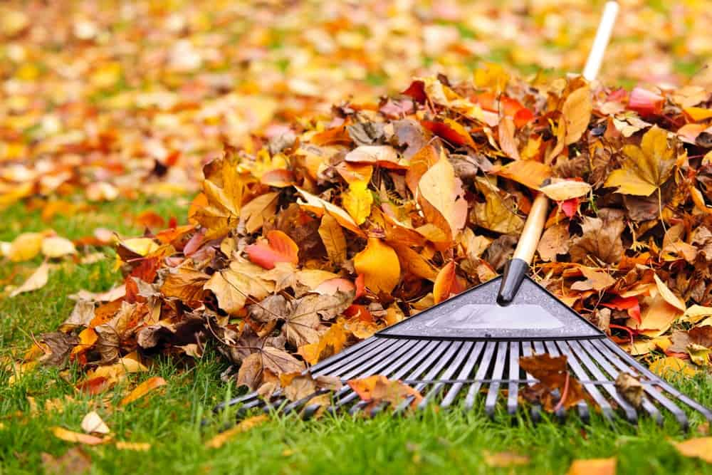 A rake rests on a pile of fall leaves on the lawn.