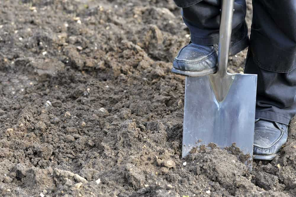 Stainless steel spade is dug through the soil.