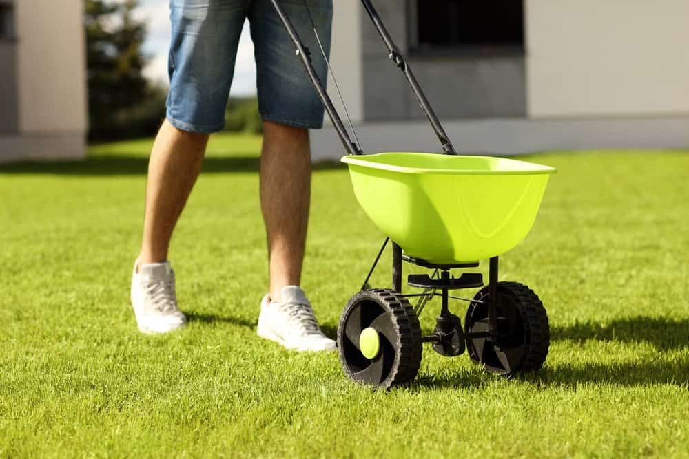 A man uses fertilizer spreader on his lawn.