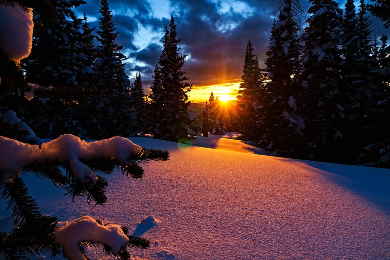 Sunrise over snow-covered trees