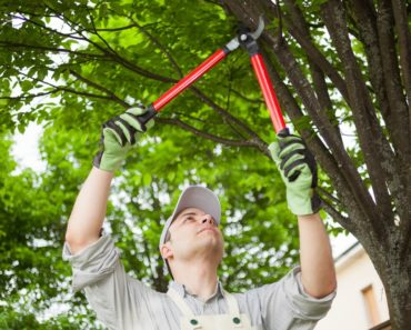 A professional gardener is using loppers to trim a tree.