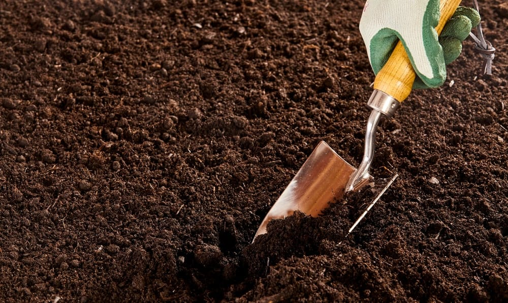 Hand in rubber gloves holds a stainless steel trowel to dig through the soil.