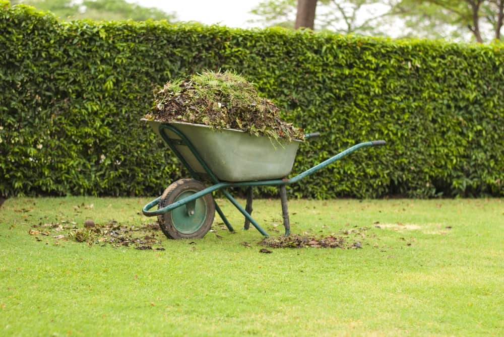 A wheelbarrow full of weeds and soil at rest on a lawn.