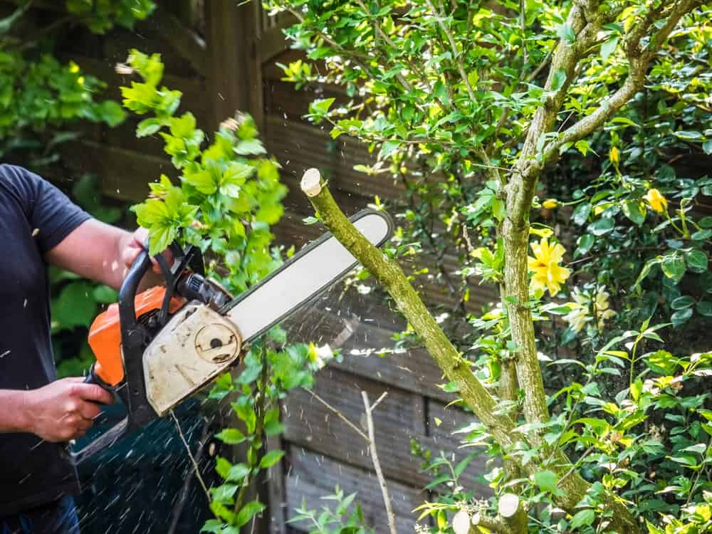 Chainsaw used to cut off a tree in the garden.