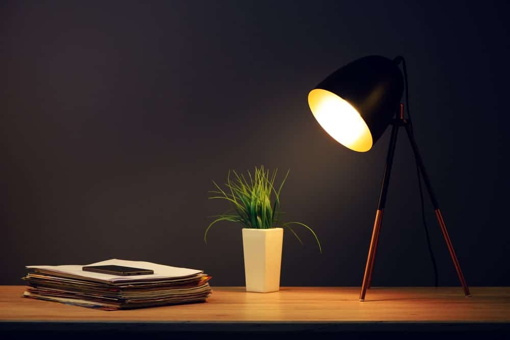 Desk lamps on wooden desk beside an indoor plant and stacks for paper.