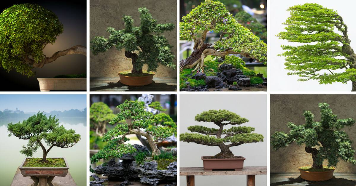 Collage of different bonsai trees