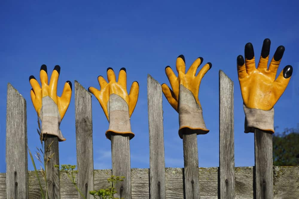 Two pairs of rubber gloves hang on top of picket fence.