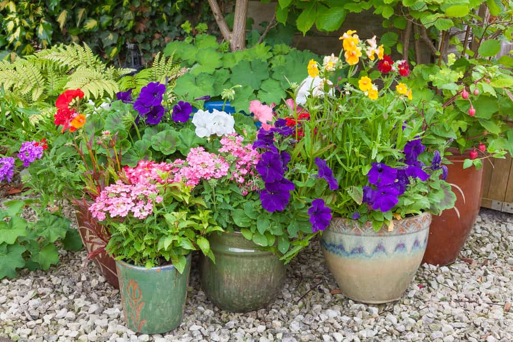 Photo of container flowers and plants on the patio