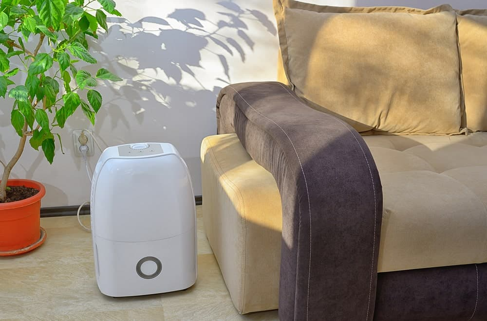 A dehumidifier between an indoor plant and a plush sofa.