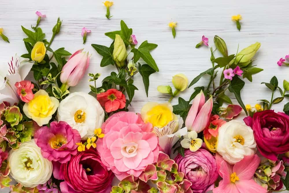 Flowers on white wooden background.