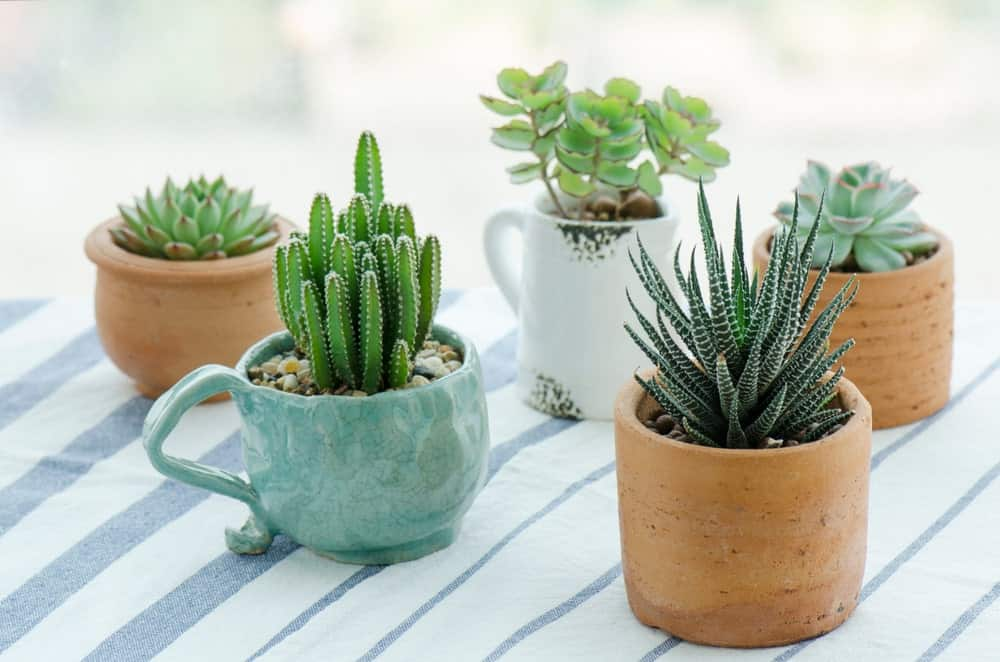 Different succulents in ceramics and clay pots.