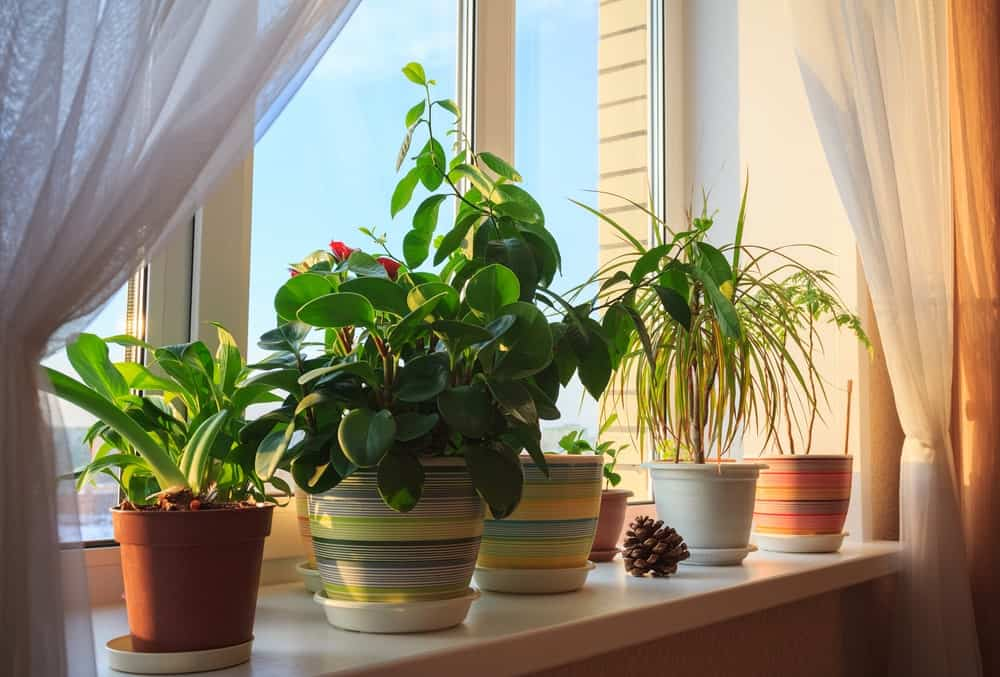 Different types of potted houseplants by the window.