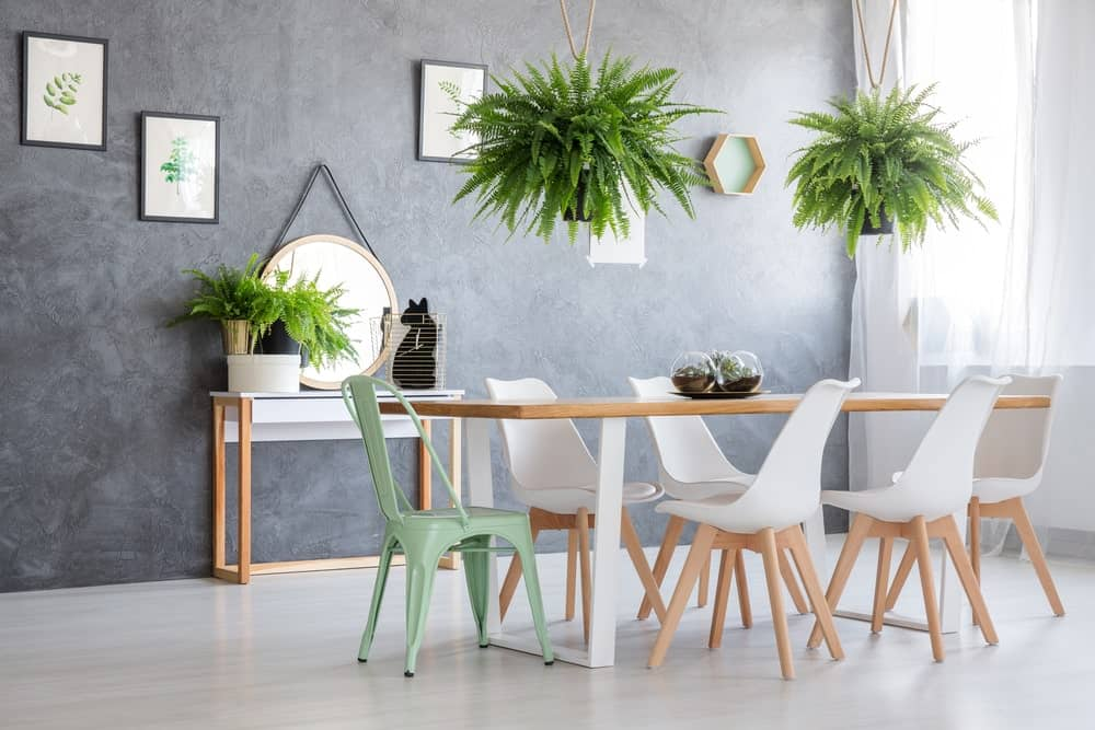 Modern dining room with hanging and potted fern plants.