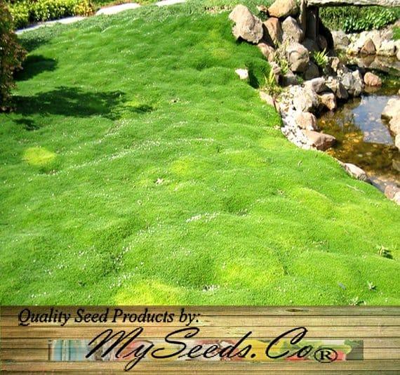 Moss grass near a pond.
