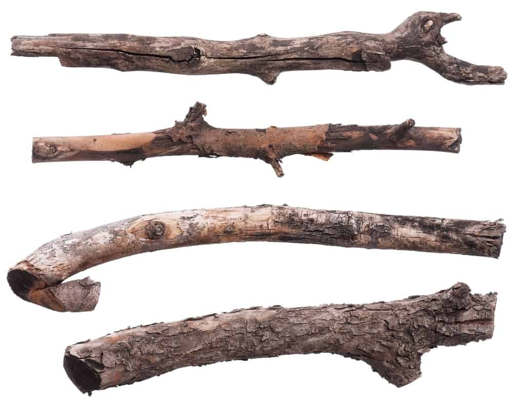 Different types of dry tree branches.