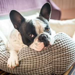 10 Different Types of Dog Beds