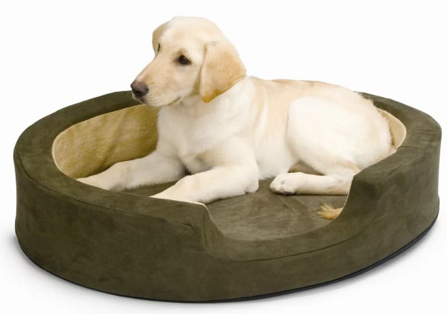 A Golden Retriever dog resting on his heated dog bed.