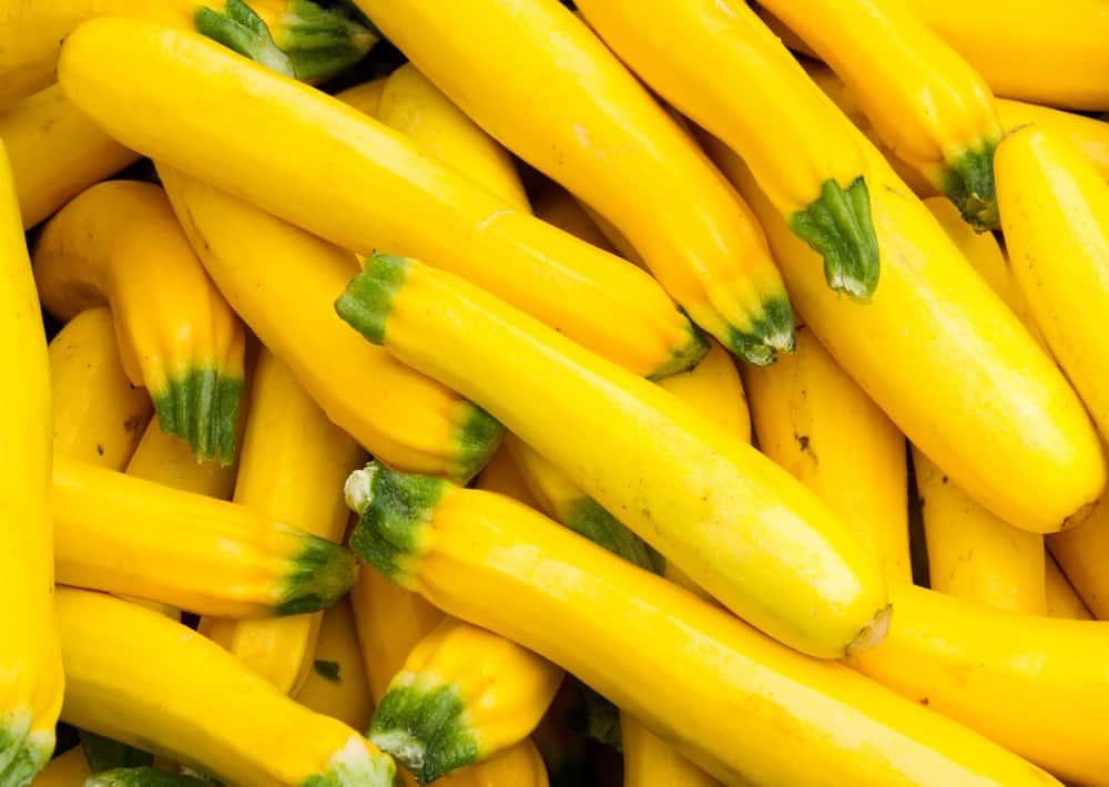 Freshly Picked Yellow Squash