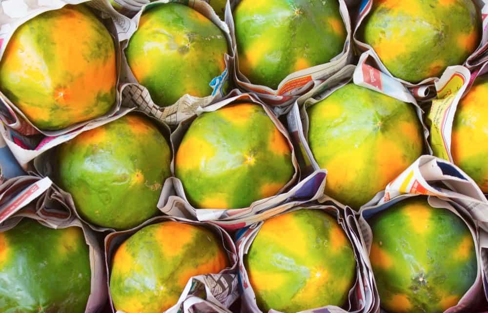 Green and yellow papayas