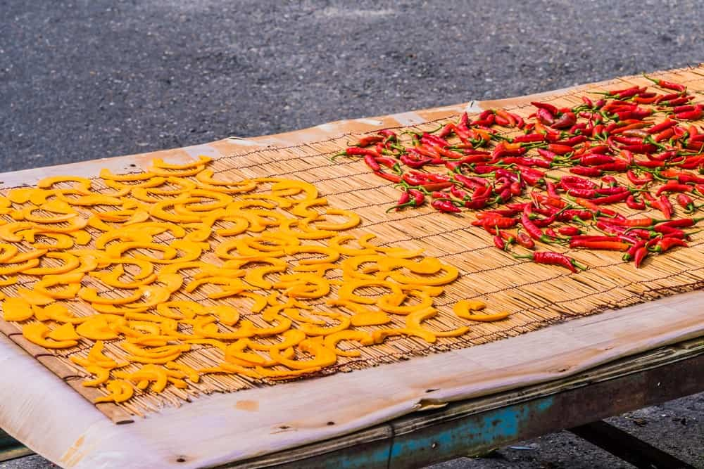 Dehydrated slices of yellow squash spread out on a dehydrating mat outdoors.