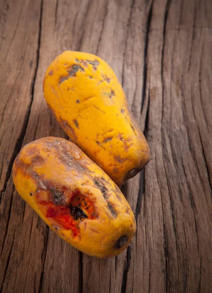 Moldy, overly ripe papayas