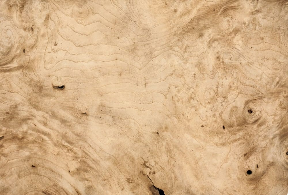 White walnut wood texture