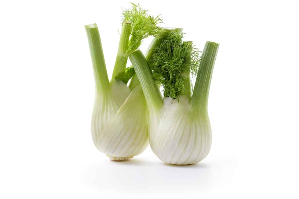 Two Fennel Bulbs