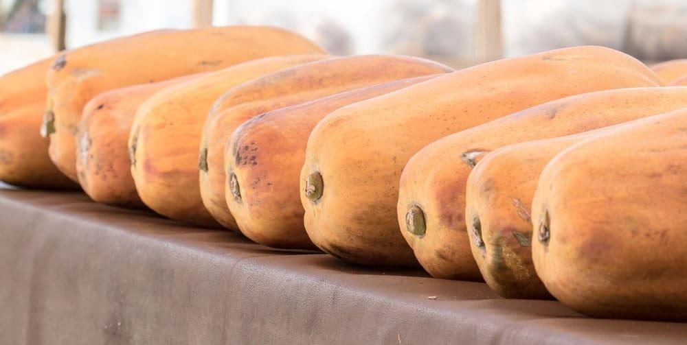 Row of papayas