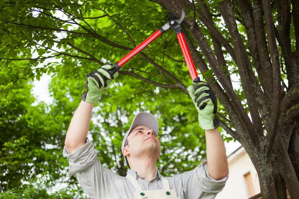 A man trimming a tree branch using a tree trimming tool.