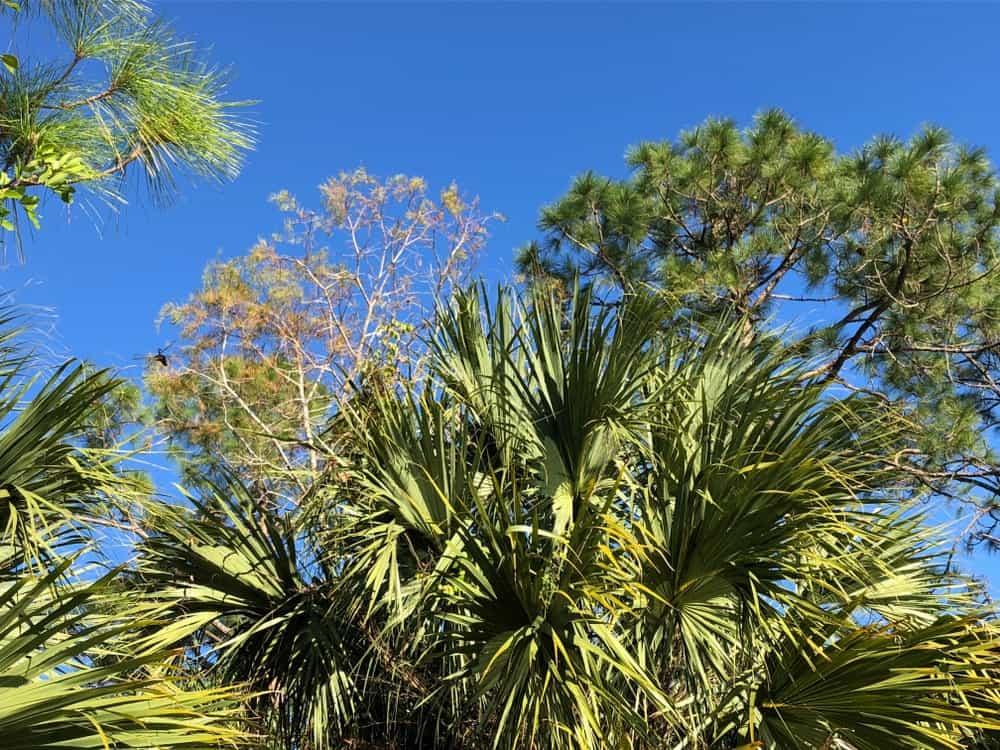 ash tree near swamp