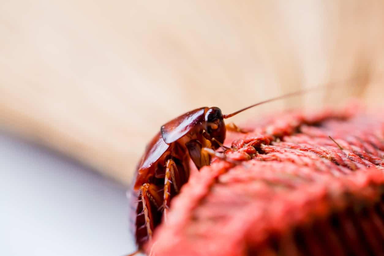 A close up look of a cockroach.