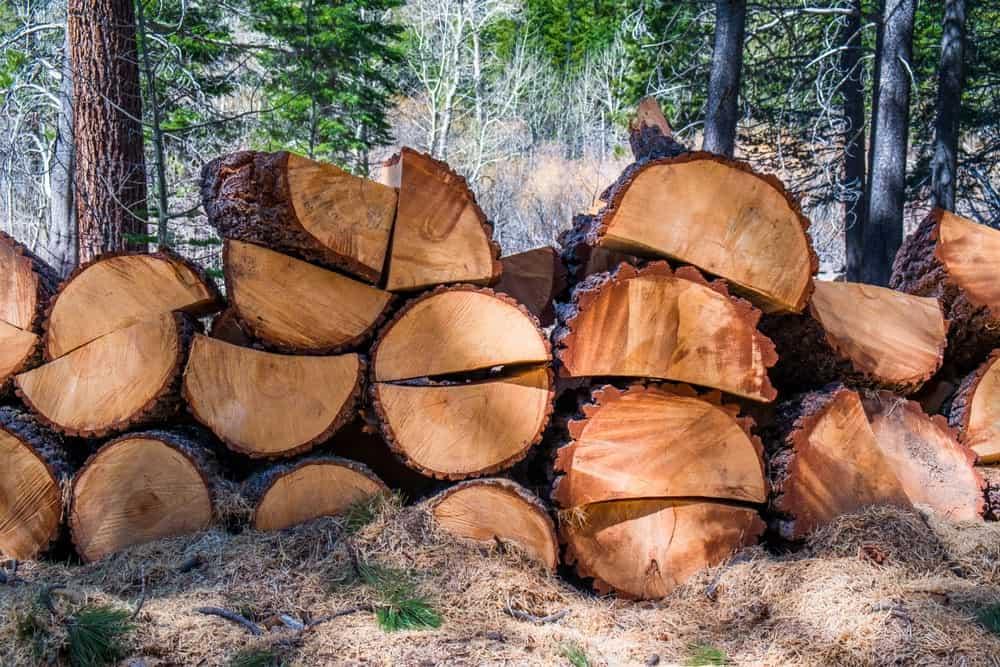 Ponderosa pine wood