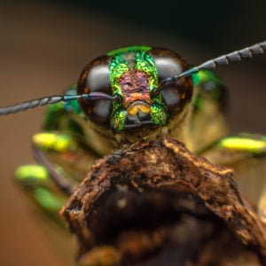 fierce looking insect close up photo