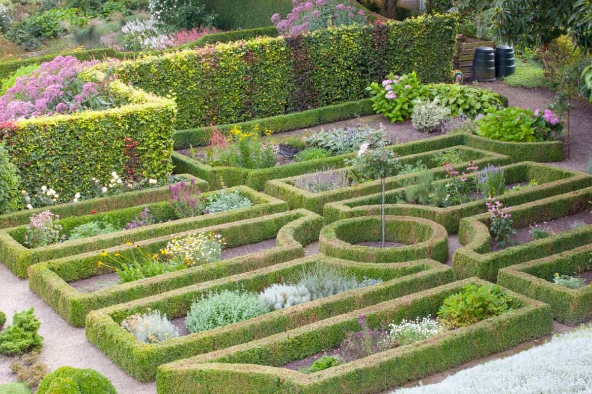 Formal manicured knot garden in large backyard